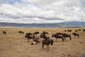 Tanzania Safari, Ngorongoro Crater