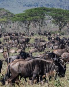 Tanzania Safari, Serengeti Safari
