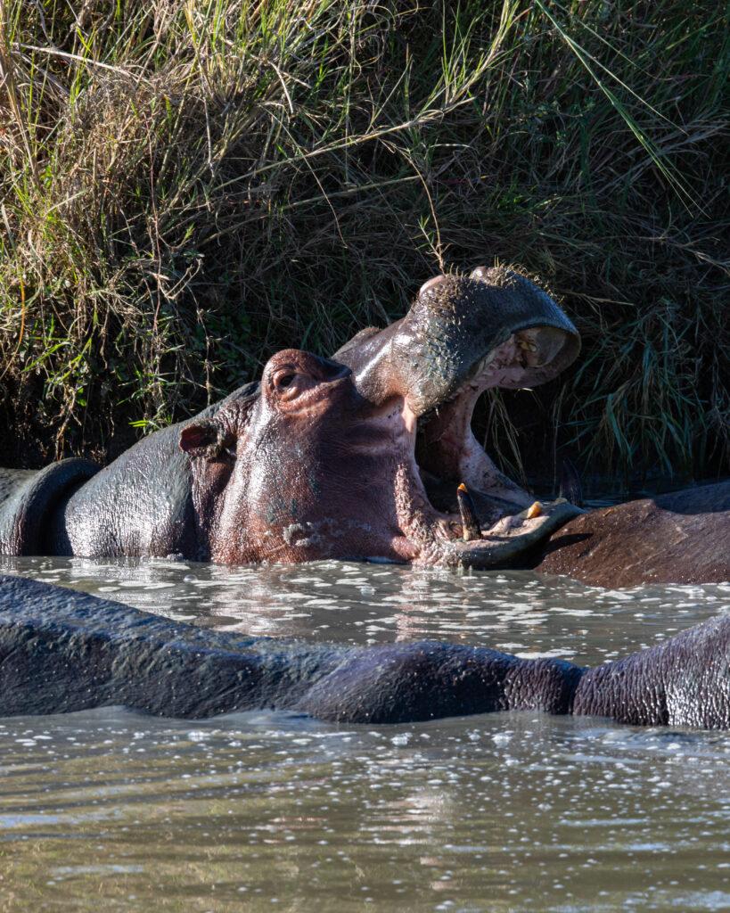 Ultimate Tanzania Safari Itinerary