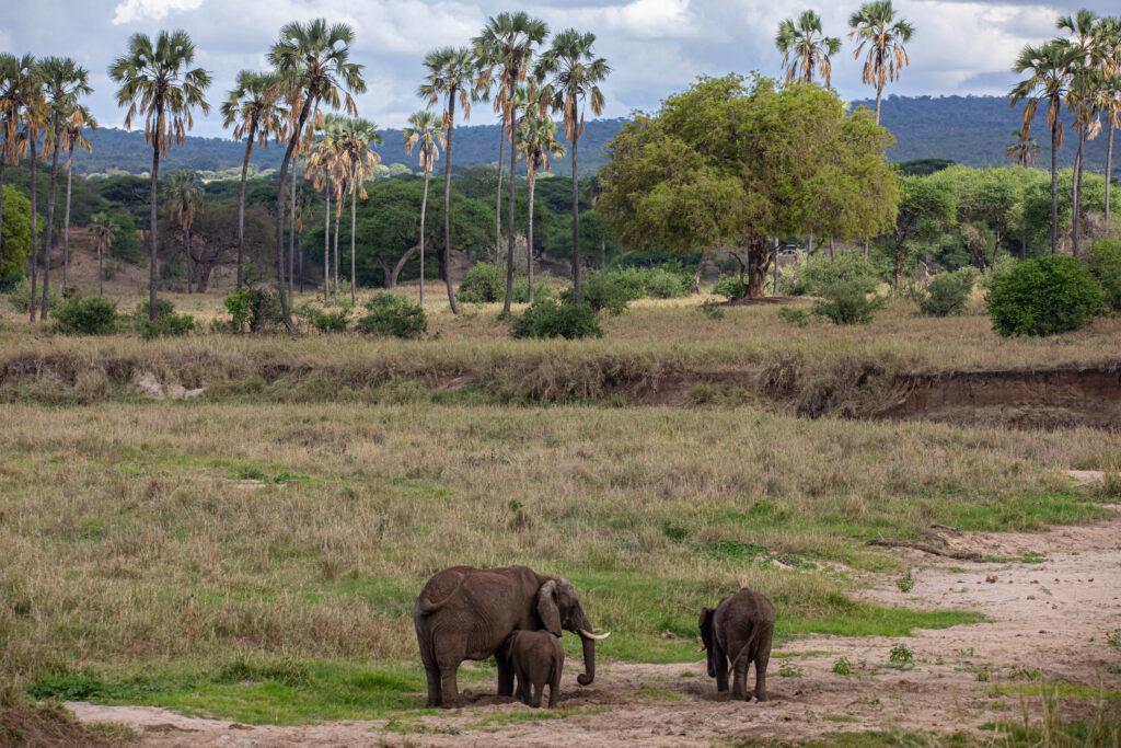 Tanzania Safari, Wildlife Safari